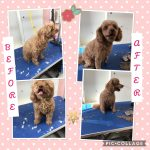 Dog Grooming and Dog Wash Altona North